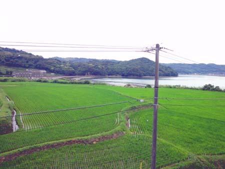 棚田と海.jpg